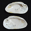 Freshwater mollusks from Neogene-Quaternary ...